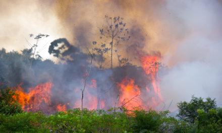 Dünyanın ciğerleri Amazon ormanları yanıyor