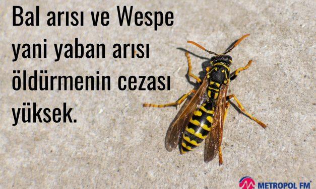 """Bal arısı ve Wespe yani yaban arısı öldürmenin cezası yüksek. """"öldürene 5.000 € ile 65.000 € arasında para cezası var"""""""