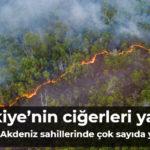 Türkiye'nin ciğerleri yanıyor Ege ve Akdeniz sahillerinde çok sayıda yangın var